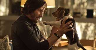 John Wick Dog